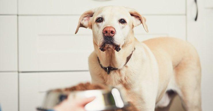 Senior Dog? Picky Eater? Give Him a Menu Upgrade!
